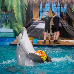 Дельфинарии, океанариумы Алабино