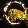 Цирки в Алабино