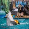 Дельфинарии, океанариумы в Алабино